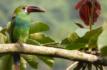 Gobernadora del Valle dará la bienvenida a participantes del Colombia Bird Fair
